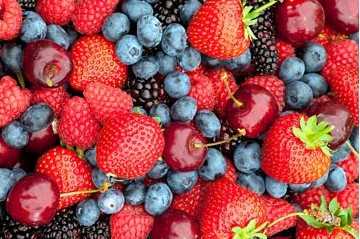 Comment planter des petits fruits rouges ?